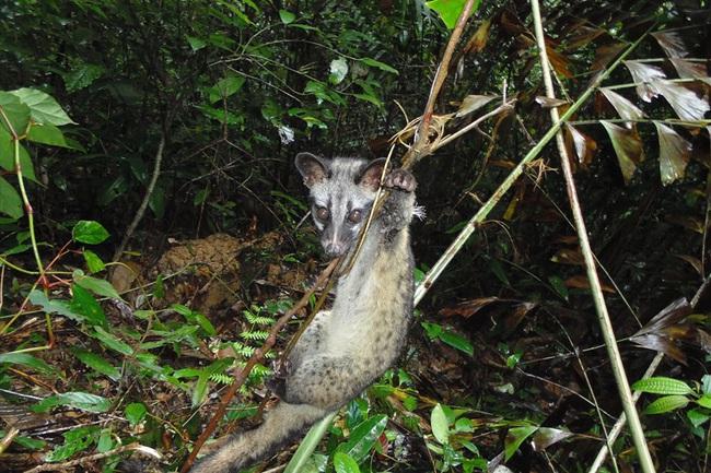 WWF cảnh báo: Có hơn 5 triệu bẫy động vật hoang dã trong các khu bảo tồn của Việt Nam - Ảnh 1.