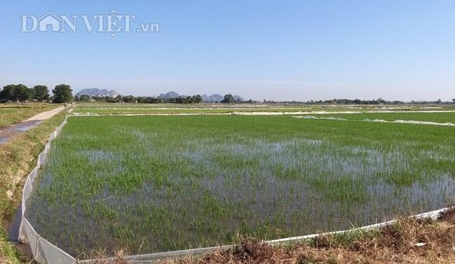 Thanh Hóa: Huy động hàng trăm máy bơm dầu dã chiến để cứu cây lúa - Ảnh 6.