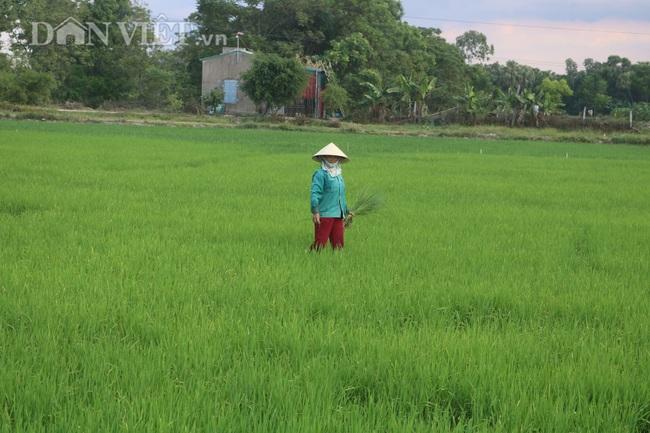Thanh Hóa: Huy động hàng trăm máy bơm dầu dã chiến để cứu cây lúa - Ảnh 5.