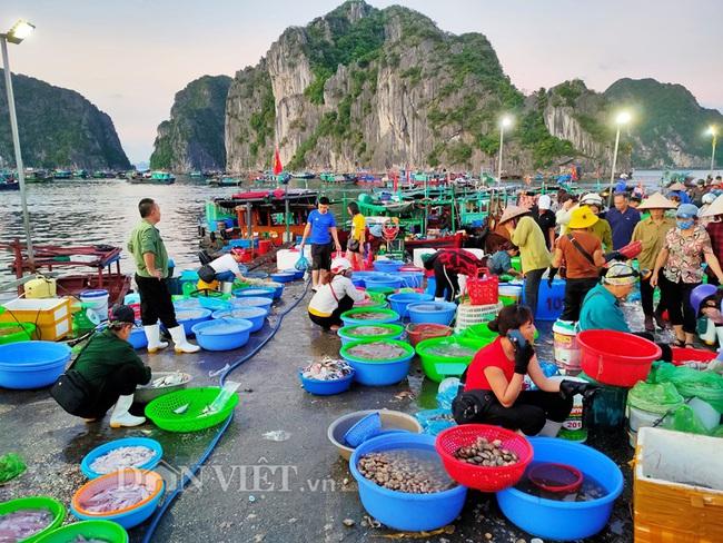 Đi săn hải sản tươi rói ở cảng cá Hạ Long lúc tinh mơ - Ảnh 2.