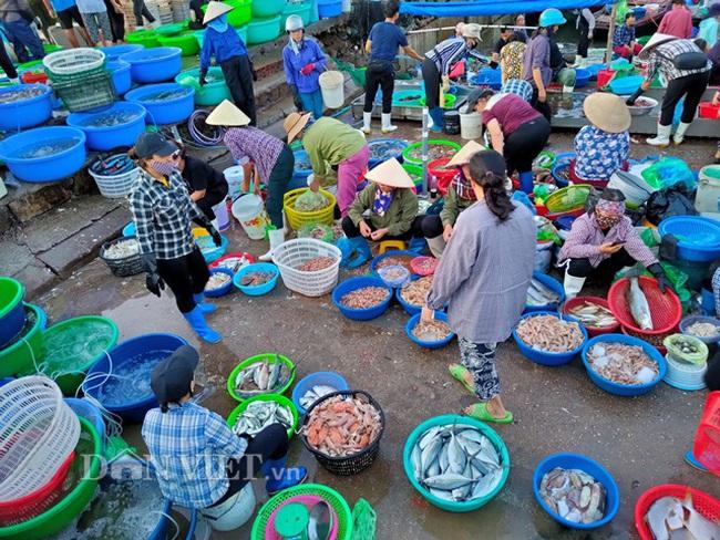 Đi săn hải sản tươi rói ở cảng cá Hạ Long lúc tinh mơ - Ảnh 3.