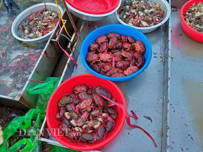 Đi săn hải sản tươi rói ở cảng cá Hạ Long lúc tinh mơ - Ảnh 5.