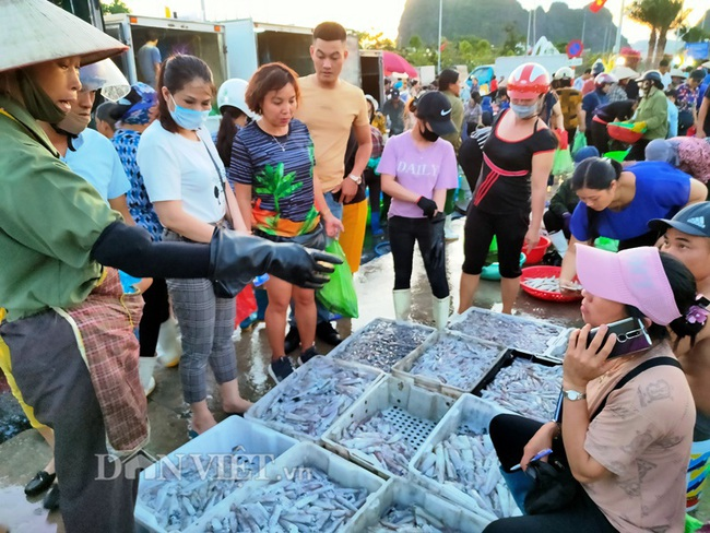 Đi săn hải sản tươi rói ở cảng cá Hạ Long lúc tinh mơ - Ảnh 6.