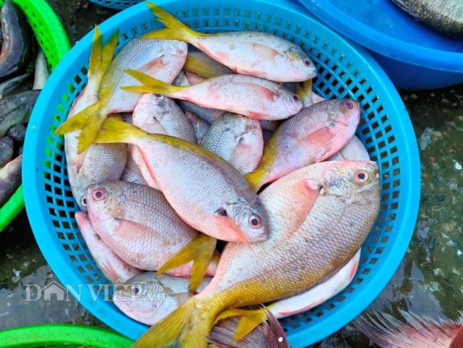 Đi săn hải sản tươi rói ở cảng cá Hạ Long lúc tinh mơ - Ảnh 7.
