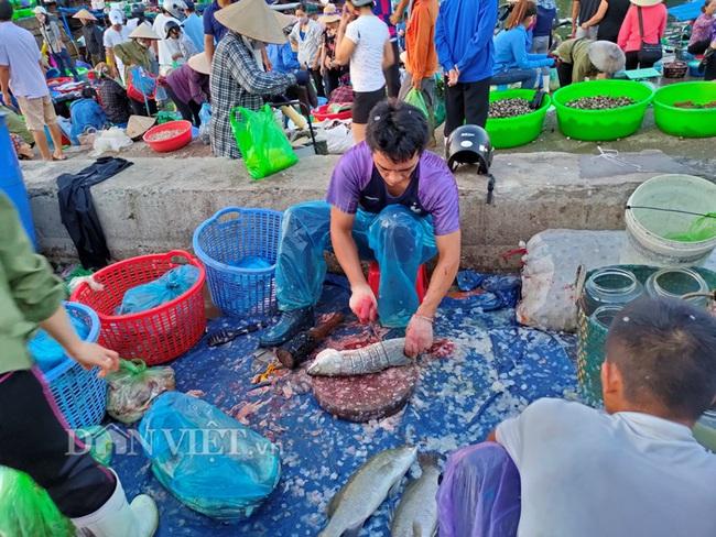 Đi săn hải sản tươi rói ở cảng cá Hạ Long lúc tinh mơ - Ảnh 8.