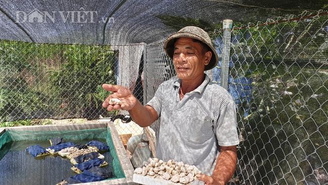 Nuôi ốc nhồi độc nhất Thái Bình, lão nông kiếm hàng chục triệu mỗi tháng  - Ảnh 3.