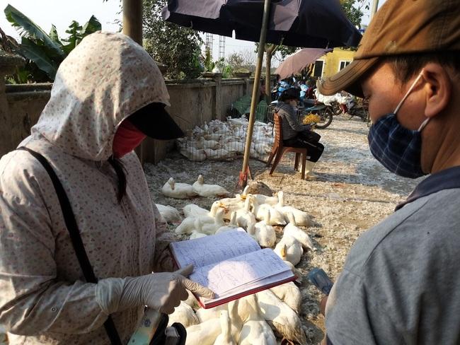 """Giá gia cầm hôm nay 21/7: Giá gà lông trắng """"ấm"""" dần, Vịt chạy đồng miền Trung """"độ bộ"""" ra Bắc - Ảnh 1."""