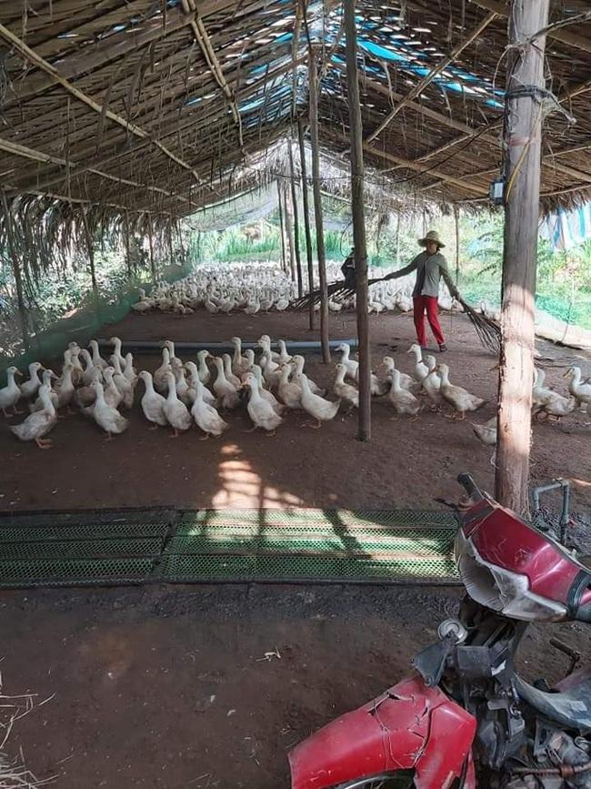 Giá gia cầm hôm nay 22/7: Giá vịt thịt miền Nam đạt mốc mới, gà thịt chưa thoát ế ẩm - Ảnh 1.