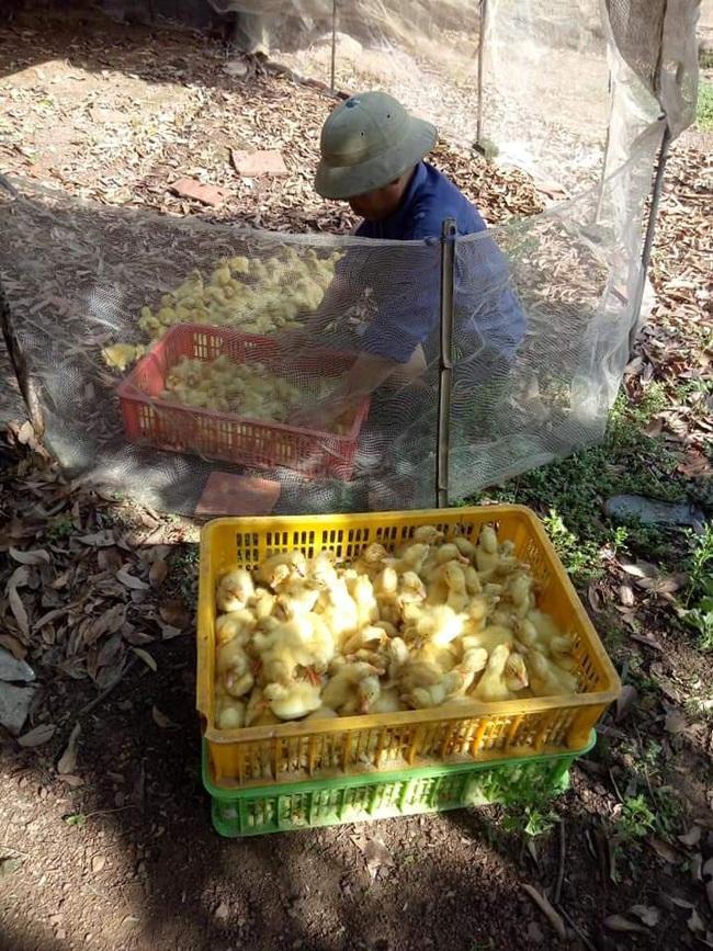Giá gia cầm hôm nay 22/7: Giá vịt thịt miền Nam đạt mốc mới, gà thịt chưa thoát ế ẩm - Ảnh 3.