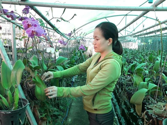 Nữ nông dân thu tiền tỷ từ trồng hoa lan trên đất nuôi tôm  - Ảnh 1.