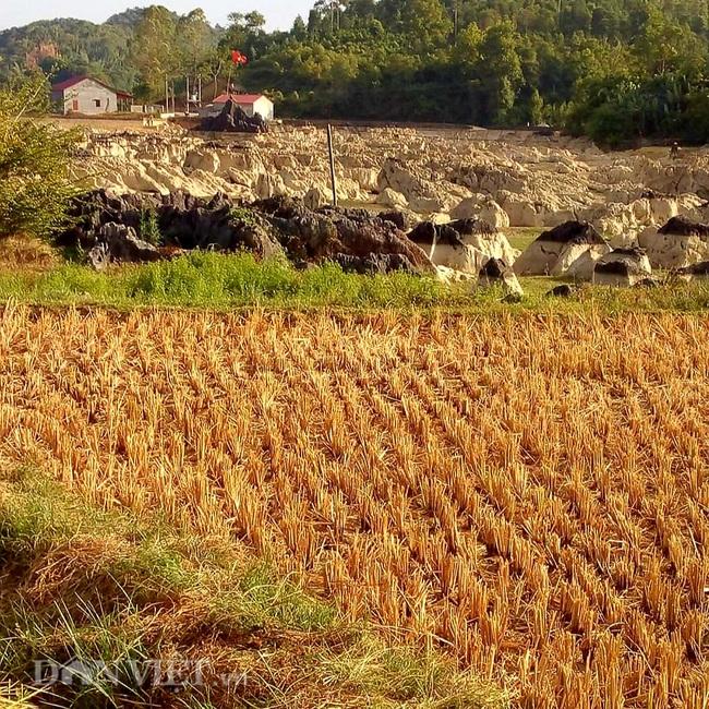Lạng Sơn: Nắng nóng kéo dài, ruộng lúa nứt toác, ao chứa dần cạn khô - Ảnh 3.