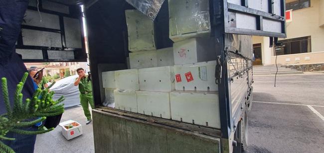Công an Đà Lạt lại bắt hàng trăm thùng dâu tây nhập từ Trung Quốc, đã 22 ngày vẫn tươi ngon - Ảnh 1.