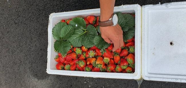 Công an Đà Lạt lại bắt hàng trăm thùng dâu tây nhập từ Trung Quốc, đã 22 ngày vẫn tươi ngon - Ảnh 2.