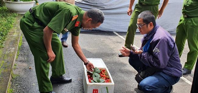 Công an Đà Lạt lại bắt hàng trăm thùng dâu tây nhập từ Trung Quốc, đã 22 ngày vẫn tươi ngon - Ảnh 5.