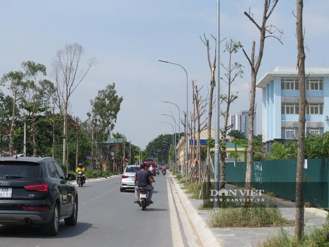 """Hà Nội: Nguy hiểm rình rập từ gần 100 cây xanh """"đột tử trên đường Sa đôi - Ảnh 1."""
