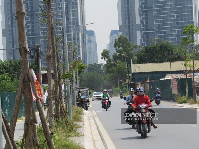 """Hà Nội: Nguy hiểm rình rập từ gần 100 cây xanh """"đột tử trên đường Sa đôi - Ảnh 4."""