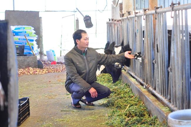 Đánh thức tiềm năng chăn nuôi của Tây Nguyên (bài 1): Đột phá chăn nuôi bò sữa ở Lâm Đồng - Ảnh 4.