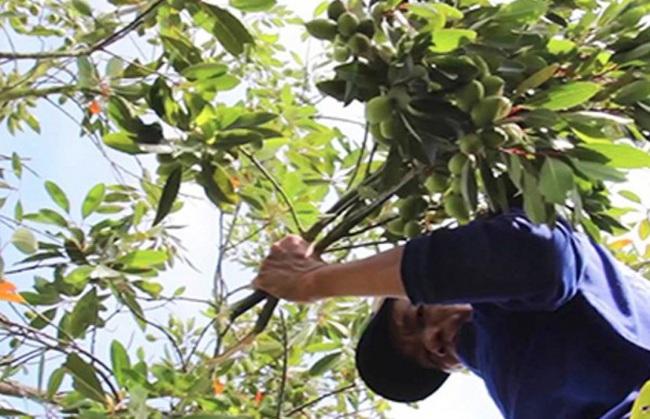 Mang cây dại từ kênh lên trồng, anh nông dân thu lãi 200 triệu đồng/năm - Ảnh 3.