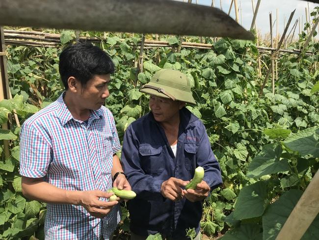 Dạy nghề hình thành vùng chuyên canh nông nghiệp  - Ảnh 1.