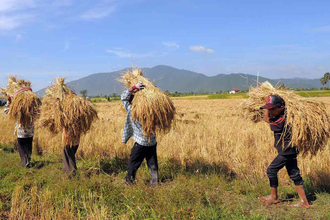 Vì sao Campuchia lọt top 5 xuất khẩu gạo vào EU? - Ảnh 1.