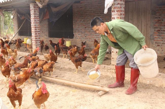 Vay vốn trồng ổi, nuôi gà, nhà nông vươn lên khấm khá - Ảnh 1.