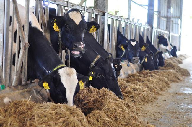 Đánh thức tiềm năng chăn nuôi của Tây Nguyên (bài 3): Những điểm nghẽn cần sớm tháo gỡ  - Ảnh 3.