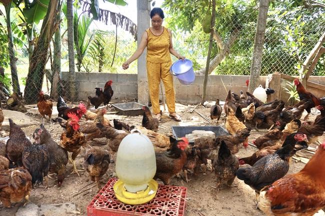 """Chi hội trưởng phụ nữ nuôi gà """"3 sạch""""  - Ảnh 2."""