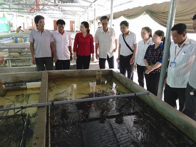 Phó Chủ tịch T.Ư Hội NDVN thăm Chi hội nuôi lươn điển hình khu vực ĐBSCL - Ảnh 1.