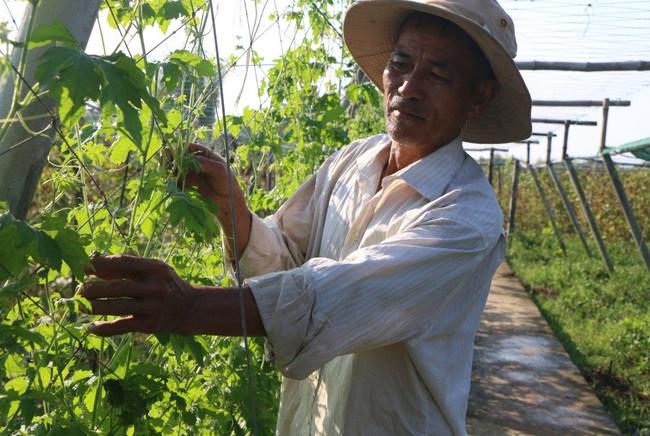 Quảng Ngãi: U60 trồng rau an toàn, thu lãi hơn 200 triệu/năm - Ảnh 1.