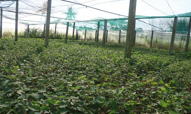 Quảng Ngãi: U60 trồng rau an toàn, thu lãi hơn 200 triệu/năm - Ảnh 3.