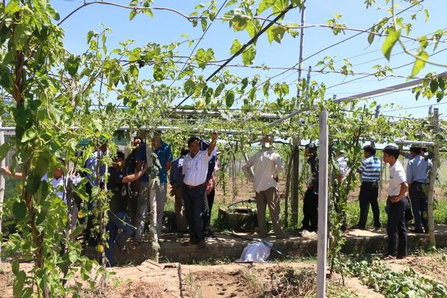 Quảng Ngãi: U60 trồng rau an toàn, thu lãi hơn 200 triệu/năm - Ảnh 4.