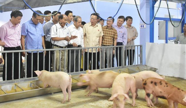 Đoàn công tác Quốc hội tham quan trang trại lợn dùng công nghệ tiên tiến nhất thế giới tại Huế  - Ảnh 1.