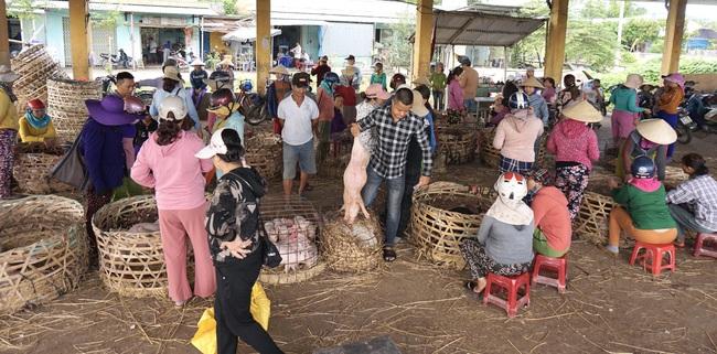 """Quảng Nam: Heo giống tăng cao, chợ """"Trư Bát Giới"""" lớn nhất miền Trung luôn tấp nập - Ảnh 3."""