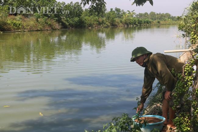 Nuôi cá chép lai, nông dân Thanh Hóa lời 150 triệu/ha - Ảnh 7.
