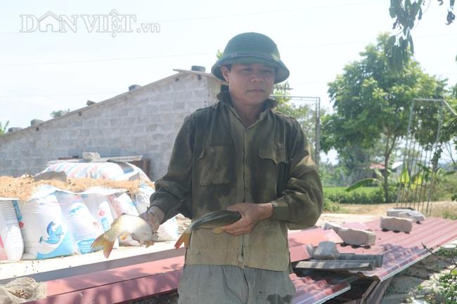Nuôi cá chép lai, nông dân Thanh Hóa lời 150 triệu/ha - Ảnh 5.