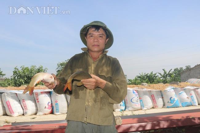 Nuôi cá chép lai, nông dân Thanh Hóa lời 150 triệu/ha - Ảnh 1.
