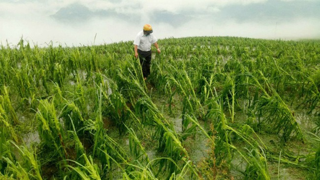 Chủ động ứng phó thiên tai ảnh hưởng nông nghiệp:  Có kịch bản ứng phó lũ lớn, nâng cấp đê... - Ảnh 1.