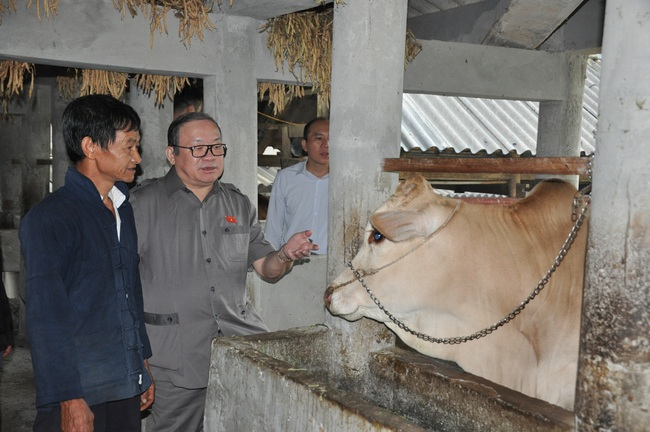 Chủ tịch Hội ND Việt Năm thăm trại bò vàng trăm triệu ở huyện nhiều đá nhất Việt Nam - Ảnh 7.