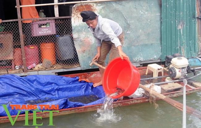 Sơn La: Thả bổ sung hơn 200.000 cá giống vào hồ thuỷ điện Sơn La - Ảnh 2.