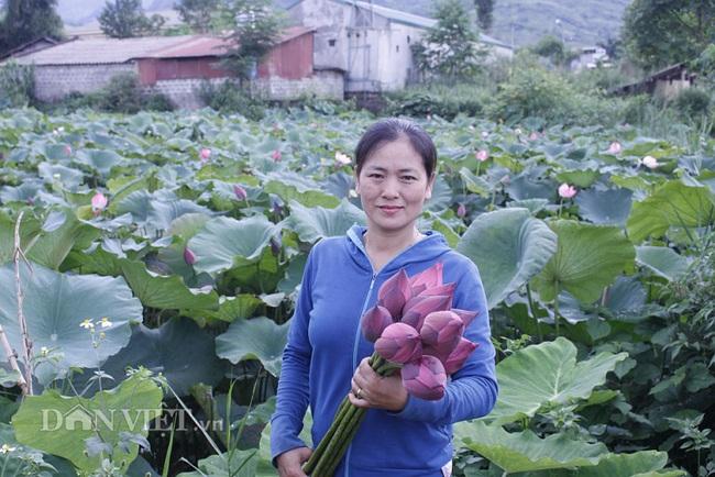 Ngất ngây ngắm ao sen nở hoa, khoe sắc ở phố núi Lai Châu - Ảnh 3.