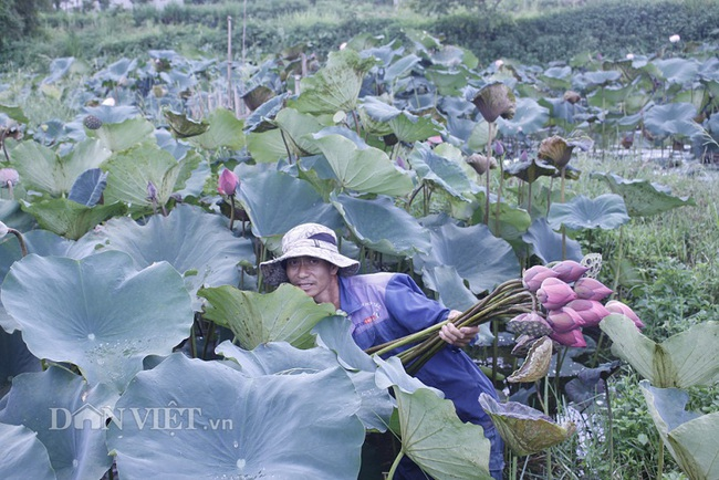 Ngất ngây ngắm ao sen nở hoa, khoe sắc ở phố núi Lai Châu - Ảnh 2.