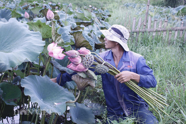 Ngất ngây ngắm ao sen nở hoa, khoe sắc ở phố núi Lai Châu - Ảnh 4.