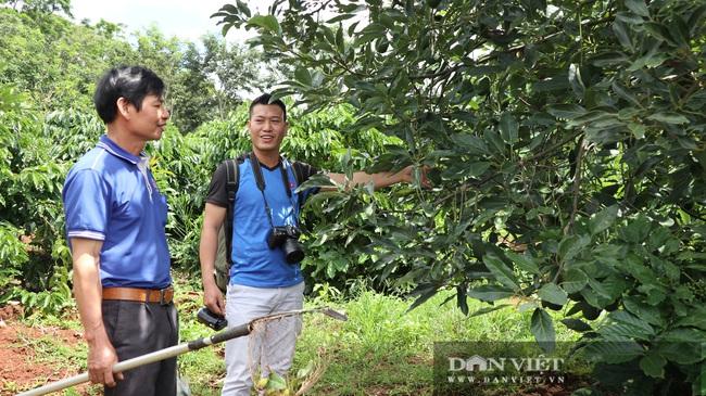 Đã mắt ngắm 200 cây bơ ghép sai trĩu trịt quả của lão nông Lâm Đồng - Ảnh 10.
