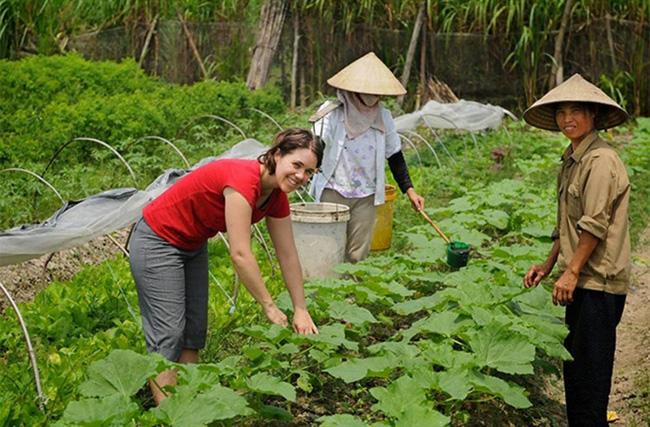 """""""Điểm tựa"""" cho nông nghiệp hữu cơ bứt phá (bài cuối): Không thể làm nông nghiệp hữu cơ một cách hình thức - Ảnh 2."""