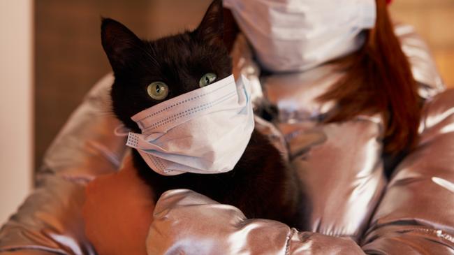 Phát hiện ngỡ ngàng: Mèo có thể là nguồn phát tán Covid-19 trong cộng đồng - Ảnh 2.