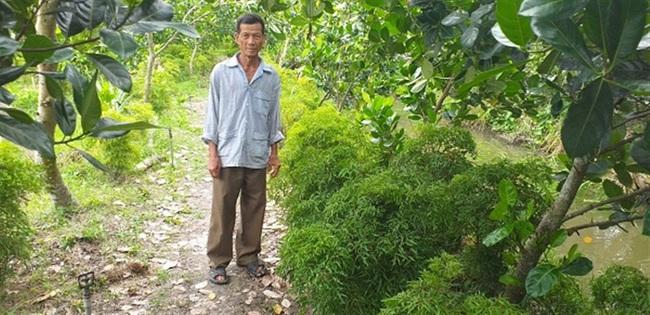 Hậu Giang: Trồng mít Thái chung vườn với đinh lăng, U70 hái thứ gì cũng bán ra tiền - Ảnh 1.
