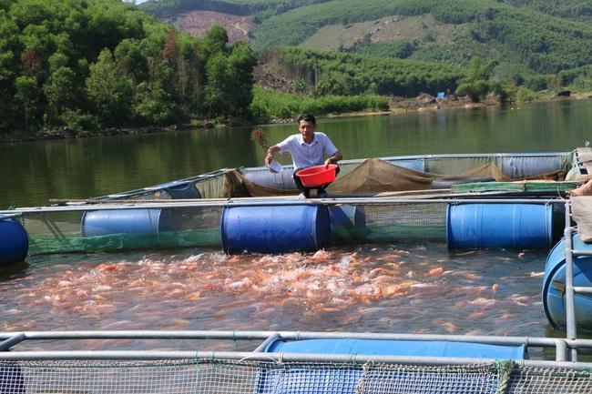 Quảng Ngãi: Nuôi cá to bự trong hồ chứa thủy lợi, nhiều nông dân miền núi khấm khá - Ảnh 1.