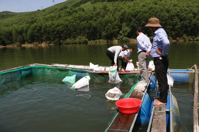 Quảng Ngãi: Nuôi cá to bự trong hồ chứa thủy lợi, nhiều nông dân miền núi khấm khá - Ảnh 2.