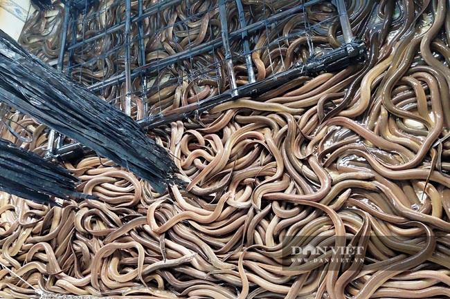Sóc Trăng: Tận dụng bể nuôi ếch nuôi lươn không bùn, anh nông dân xứ cồn thắng lớn - Ảnh 1.