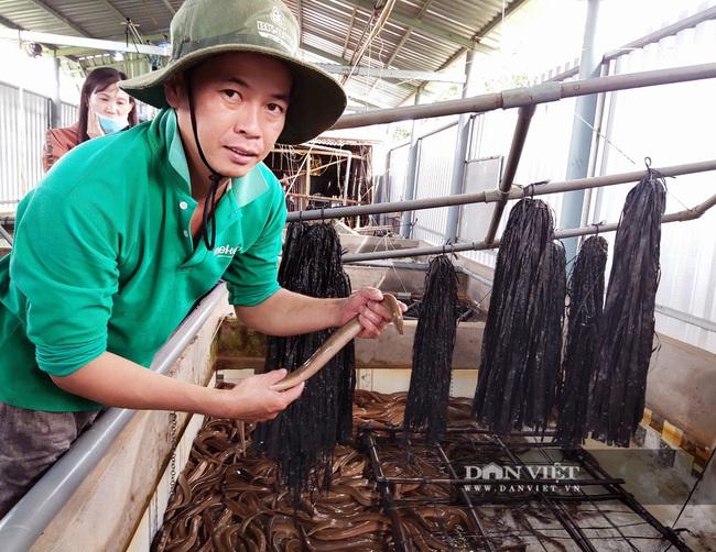 Sóc Trăng: Tận dụng bể nuôi ếch nuôi lươn không bùn, anh nông dân xứ cồn thắng lớn - Ảnh 4.